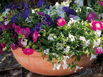 Anfore Con Fiori.Vasi Di Terracotta Per Arredare Il Giardino