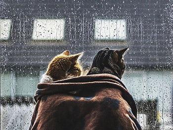 """Dal sole alla pioggia… articoli al passo coi """"tempi"""""""