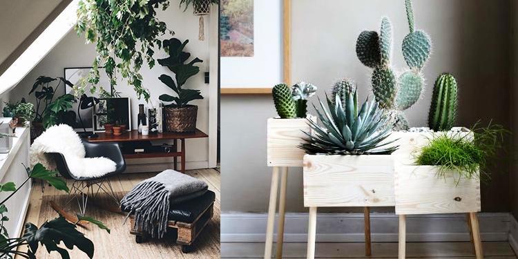 rinnova casa piante