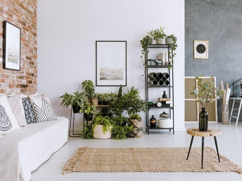 vasi di piante in soggiorno moderno