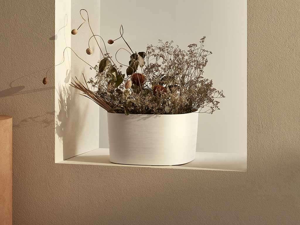 vaso di piante secche